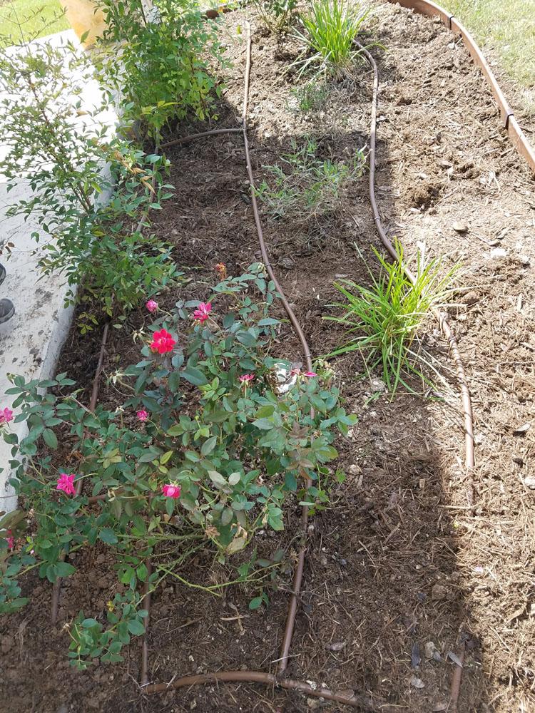 Drip Irrigation Grid