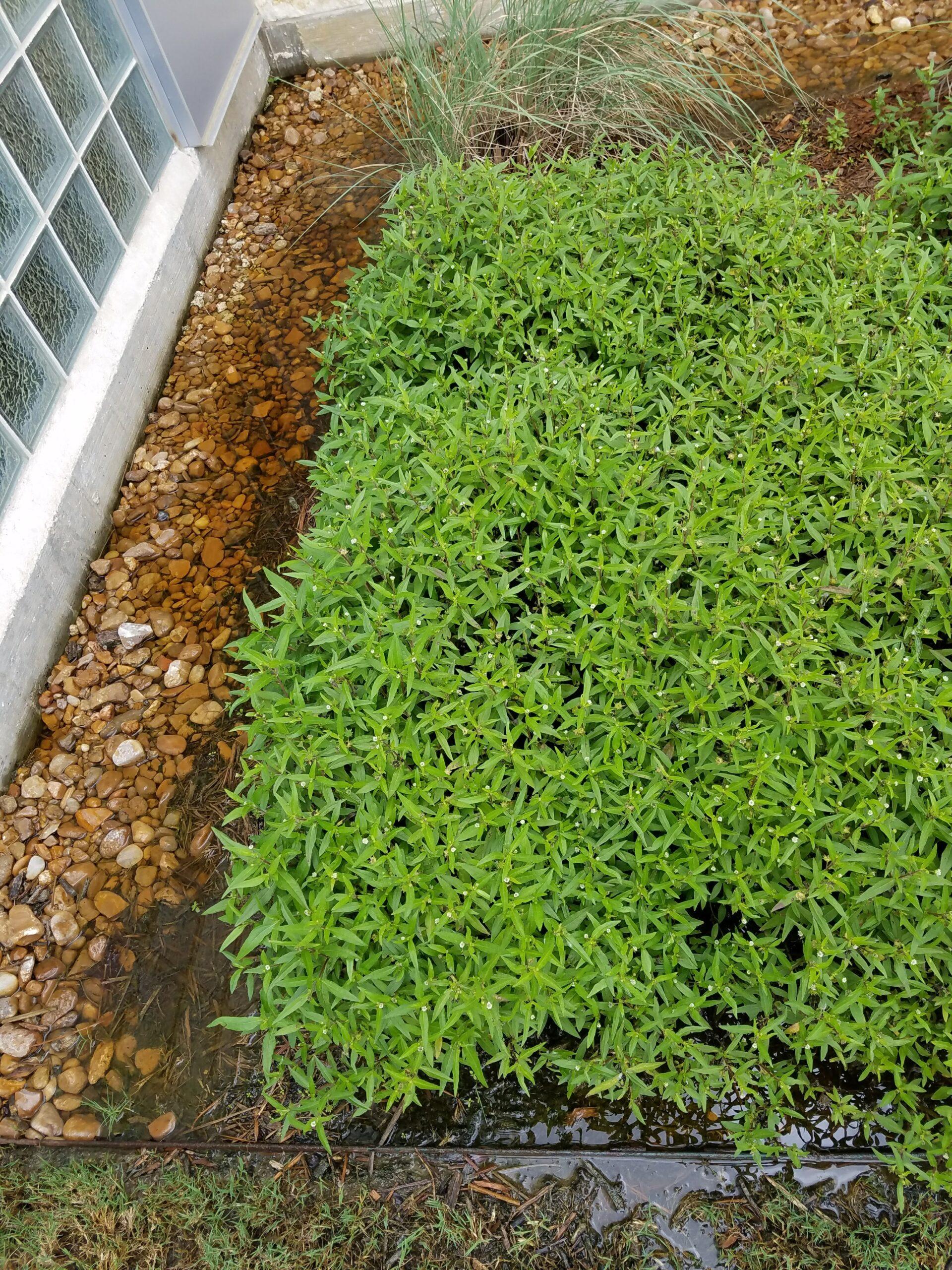 Landscape Maintenance Irrigation Repair